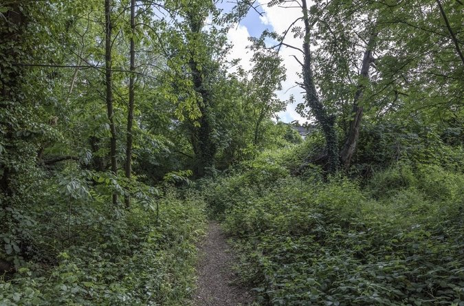 Area Guide New Cross & Telegraph Hill  Parks & Green Spaces New Cross Gate Cutting Nature Reserve